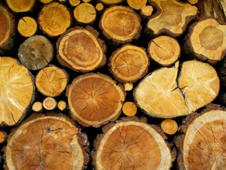A group of logs